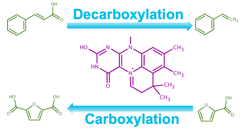 Future BRH - Case Study - Case study: Novel (de)carboxylation catalysts to drive the CO2 bioeconomy